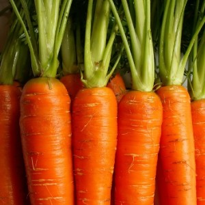 Carrots NutriShield Multi Vitamins and Minerals