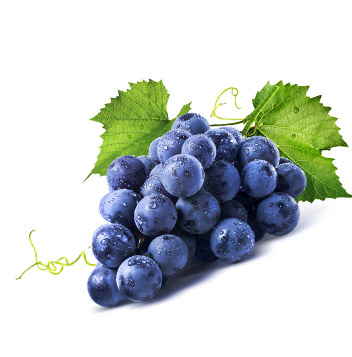 Grapeseed protects the brain NutriShield Multi Vitamins and Minerals