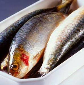 sardin NutriShield Multi Vitamins and Minerals