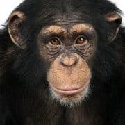 The fat gene - blame your ape ancestors NutriShield Multi Vitamins and Minerals