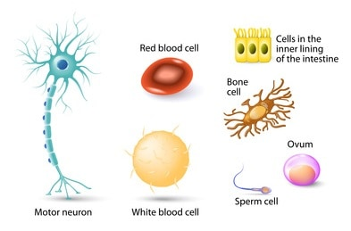 Building Blocks Of Cells