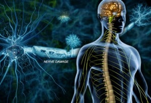 webmd_rm_photo_of_nerve_damage NutriShield Multi Vitamins and Minerals