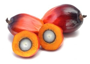 Oil palm fruit on white background NutriShield Multi Vitamins and Minerals