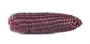 purple corn on white background NutriShield Multi Vitamins and Minerals