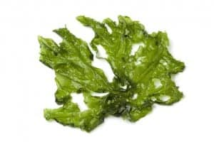 Leaf of Sea lettuce NutriShield Multi Vitamins and Minerals
