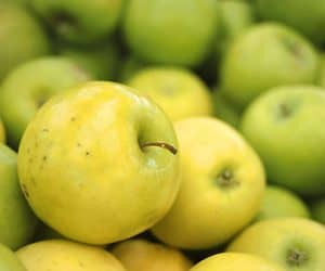 apples-green NutriShield Multi Vitamins and Minerals