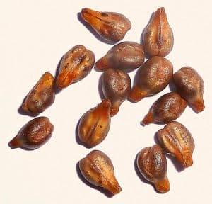 grape-seeds NutriShield Multi Vitamins and Minerals