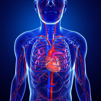 No.8 How long does blood take to travel through the vascular system? NutriShield Multi Vitamins and Minerals