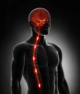 Spinal cord nerve energy impulses into brain NutriShield Multi Vitamins and Minerals