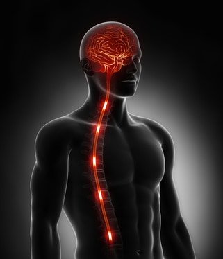 No.11 How fast do nerve impulses travel to and from the brain? NutriShield Multi Vitamins and Minerals
