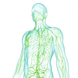 Anatomy of male lymphatic system NutriShield Multi Vitamins and Minerals