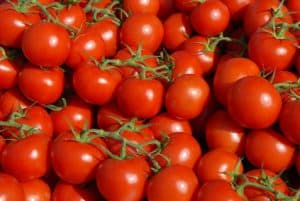 Tomaten in Le Lavandou NutriShield Multi Vitamins and Minerals