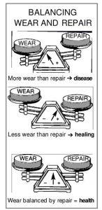 3-scales-wear-repair NutriShield Multi Vitamins and Minerals