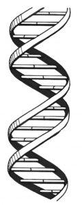 DNA NutriShield Multi Vitamins and Minerals