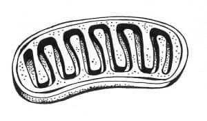 mitochondrion NutriShield Multi Vitamins and Minerals