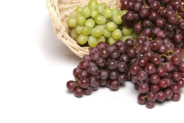 Grapeseed fights cancer NutriShield Multi Vitamins and Minerals